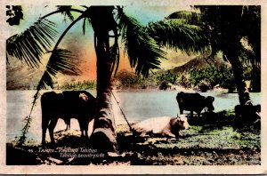 Tahiti View Of Tahitian Countryside 1935