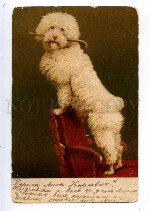 234994 Circus White Poodle Dog By Nh Vintage Tuck Postcard