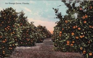 An Orange Grove In Florida