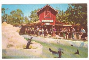 The Seal Pool and Old Mac Donald's Farm, Ghost Town,  California, 40-60s