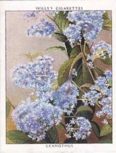 Wills Vintage Cigarette Card Flowering Shrubs 1934 No 3 Ceanothus