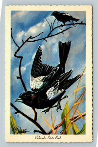 The Lark Bunting, Colorado State Bird Chrome Postcard