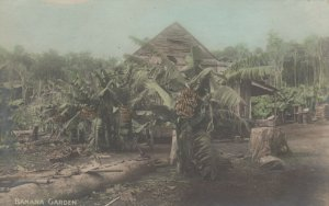 RP: Australia , 00-10s ; Banana Garden