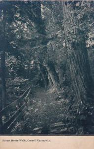 New York Ithaca Forest Home Walk Cornell University 1910