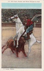 Bull Fight Picador and Horse Charged By Bull Curteich