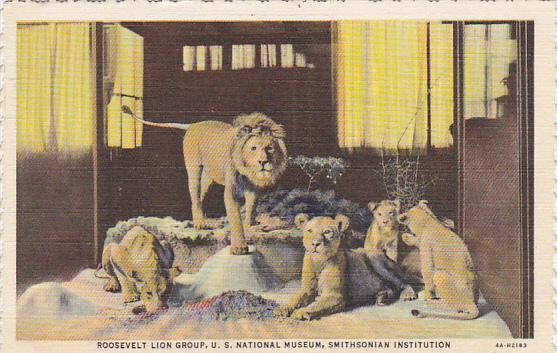 Roosevelt Lion Group National Museum Smithsonian Institution Curteich