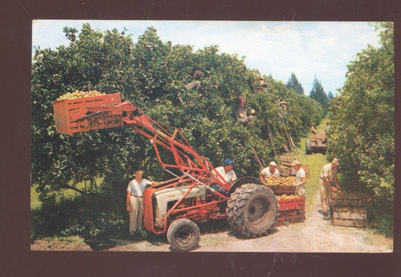 CITRUS HARVEST IN FLORIDA ORCHARD FARMING FORD 8N TRACTOR VINTAGE POSTCARD