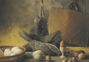 Guinea Fowl White Hens Egg Eggs Goose Duck Pheasant Still Life Food Postcard