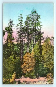 Postcard CA Big Sur Big Sur Lodge Carmel San Simeon Highway Handcolored #2 R64