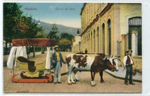 Carro de Bois Ox Sled Madeira Portugal 1910c postcard