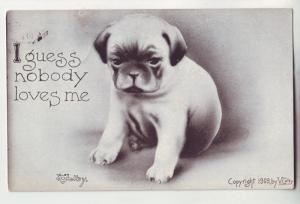 P1117 1910 used comic volby stamped card cute puppy i guess nobody loves me
