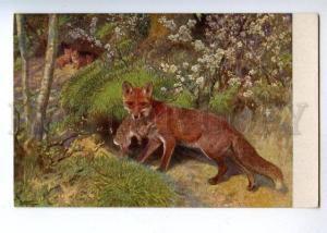 178142 FOX fox hunting hare in teeth #26 vintage postcard