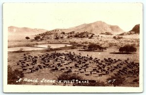 VTG Postcard RPPC Real Photo Ranch Scene Cattle Cow West Texas TX Valley A9