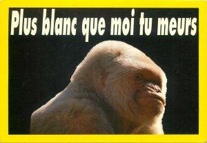 Animals france monkey chimpanzee gorilla baboon white Postcard