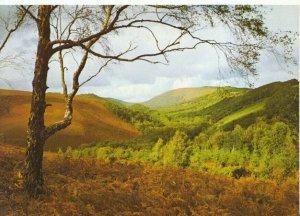Devon Postcard - The Bovey Valley - Dartmoor - Ref TZ3029