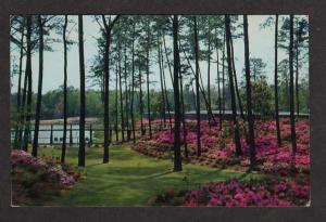 VA Delhaven Gardens & Nursery BAYSIDE VIRGINIA Postcard
