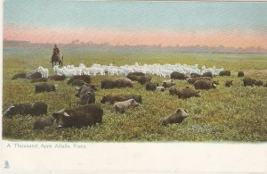 A Thousand Acre Alfalfa Field. Horseman  Tuck Dallas Texas Ser. PC # 2378
