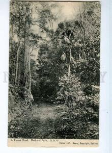 247388 AUSTRALIA New South Wales National Park Vintage PC