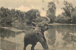 Ceylon elephant trimmed 8x13cm early postcard