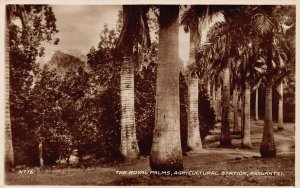 Ghana Gold Coast Assuantsi The Royal Palms RP Postcard