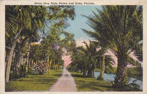 Drive Thru Date Palms And Oaks, Florida, 1910-1920s