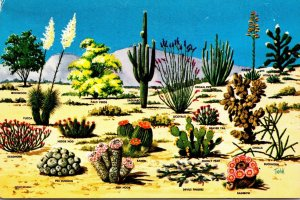 Cactus and Desert Flora Of The Great Southwest