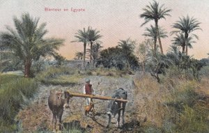 Egypt , 1900-10s ; Blanteur en Egypte