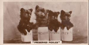 Cat Cats Covered In Pickle Sauce Jar German Real Photo Cigarette Card