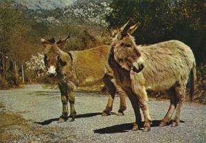 Charmes et Couleurs de la Corse , France , 50-60s ; Donkey