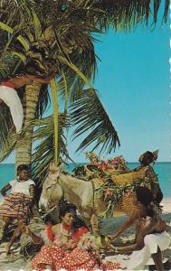 Picking Coconuts, Peeling Coconuts, JAMAICA, 40-60´