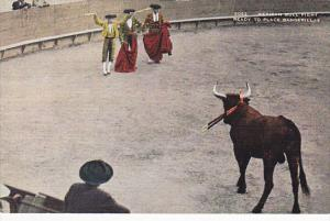 Mexican Bull Fight Ready To Place Banderillas