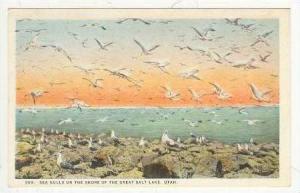 Sea Gulls On Shore, Great Salt Lake, Utah, 1910-20s