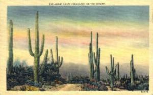 Giant Cacti San Antonio TX 1946