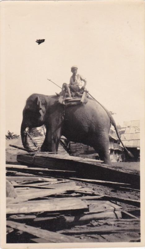 RP: Man w/ elephant , RANGOON , Burma , 00-10s