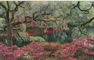 Middleton Gardens Charleston South Carolina