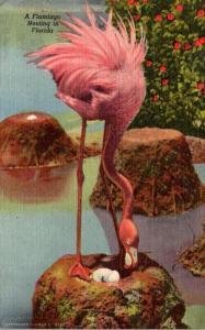 Birds Flamingos Nesting At Hialeah Race Course Miami Florida 1951 Curteich
