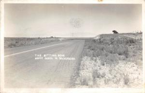 B16/ White Sands Dunes Michigan Mi Real Photo RPPC Postcard Sitting Bear c40s