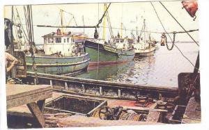 Chalutiers Modernes En Port- Modern Draggers In Port, Bay Chaleur, New Brun...