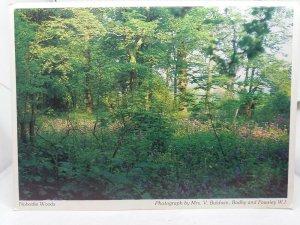 Vintage Postcard Nobottle Woods Northampton Northamptonshire 1980s