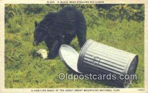 Great Smokey Mountains National Park Bear Postcard Bear Post Card Old Vintage...