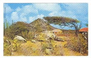 Hooiberg with Diva Tree , Aruba , N.A. , 40-60s