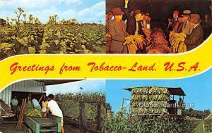 Smoking Old Vintage Antique Post Card Tobacco Land, USA Unused
