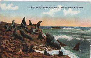 Seals On Seal Rocks Cliff House San Francisco California