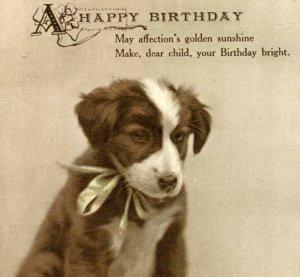 Antique Birthday card postcard puppy dog portrait on a plate cute #65