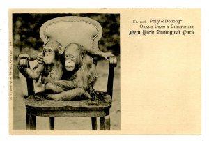 Orang Utan & Chimpanzee