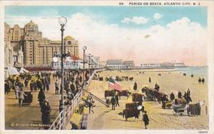 New Jersey Atlantic City Ponies On The Beach 1928 Curteich