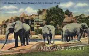 Elephant, Chicago Zoological Park at Brookfield, Illinois, USA Elephants, Unu...