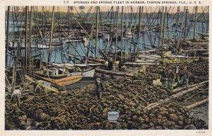 TARPON SPRINGS, Florida, PU-1939; Sponges And Sponge Fleet In Harbor