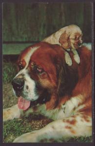 St Bernard's Postcard