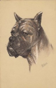 AS: Portrait of Boxer Dog, 1900-10s
